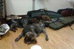 Nach getaner Arbeit soll man ruh'n!!! Ayla, Ayka und Donna vom Nussbach