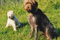 Drafi und Lisa
