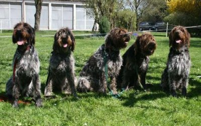v.l.n.r.: Donna, Cita, Briska, Ayka und Buddy vom Nußbach